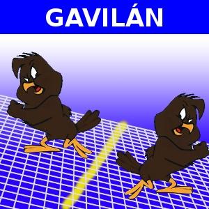 GAVILÁN